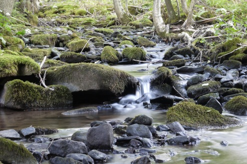 Stream fall